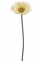 IT601-Cream - Gerber Daisy