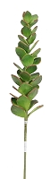 ISTP006-GR - Medium Crassula-Green-12/144 pcs