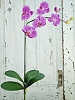 IT018-DKPink-Phalaenopsis 6flwrs 2buds-6/72pcs